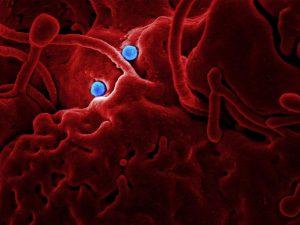 Cómo proteger tu empresa del Coronavirus